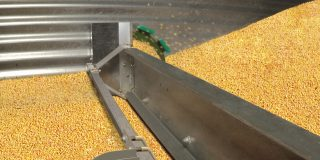 Edit of Farm unload in gold corn V2